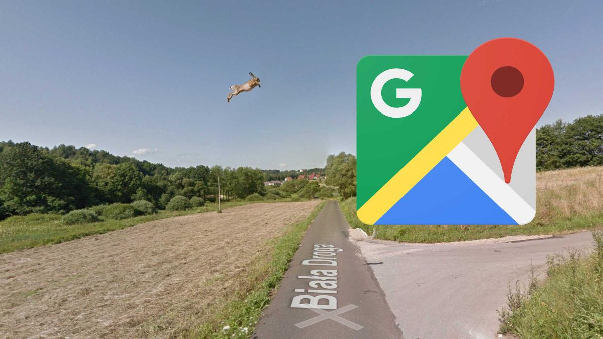 A hare is found flying on Google Maps, but you won't like the reason why