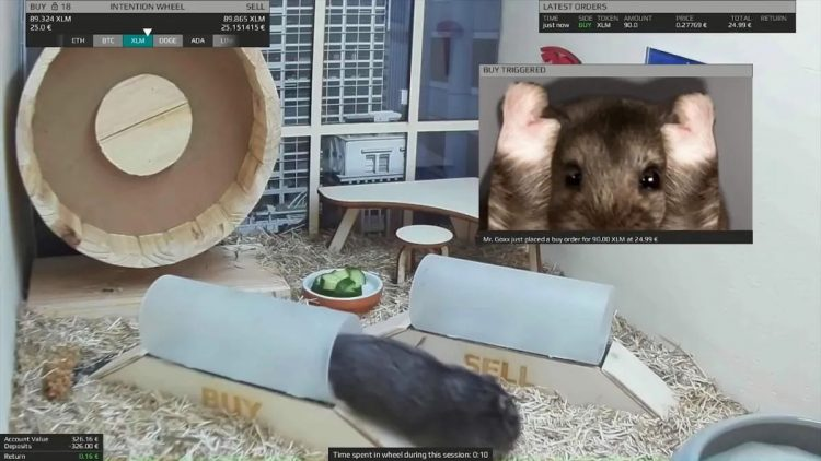 Hamster trades cryptocurrencies, outperforms Bitcoin